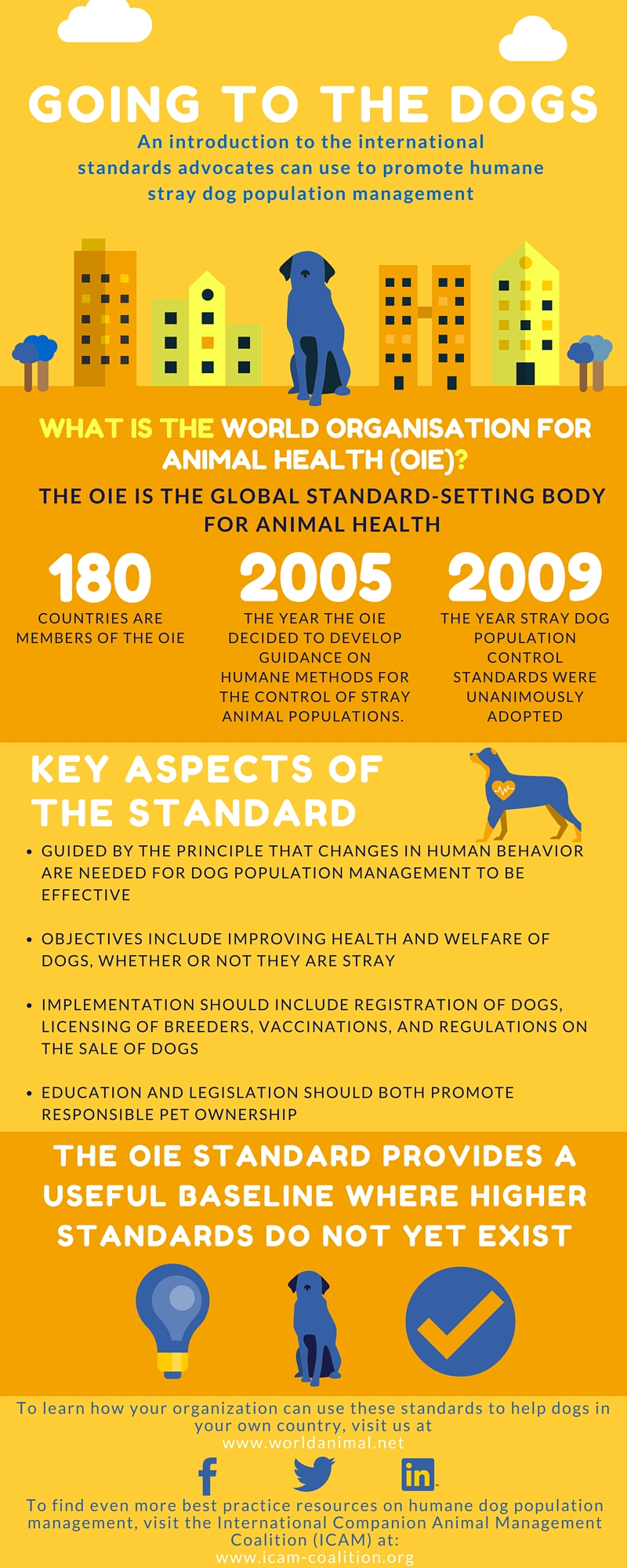 OIE stray dog standard infographic 2