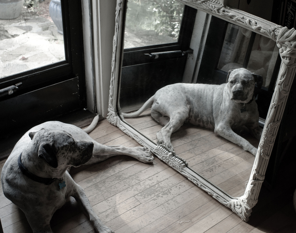 dog-in-mirror
