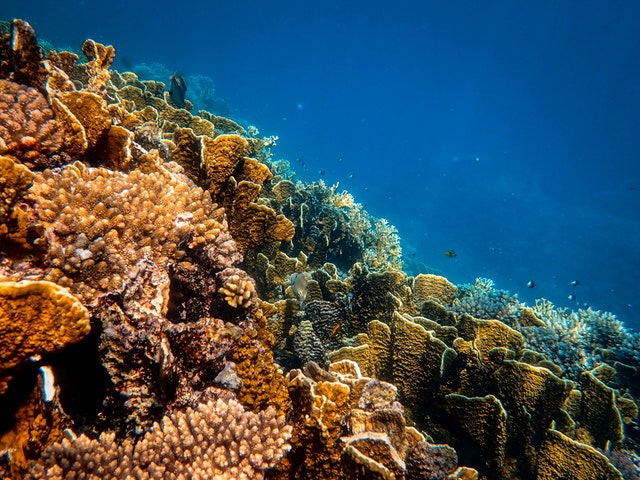 photo of corals underwater 3684931