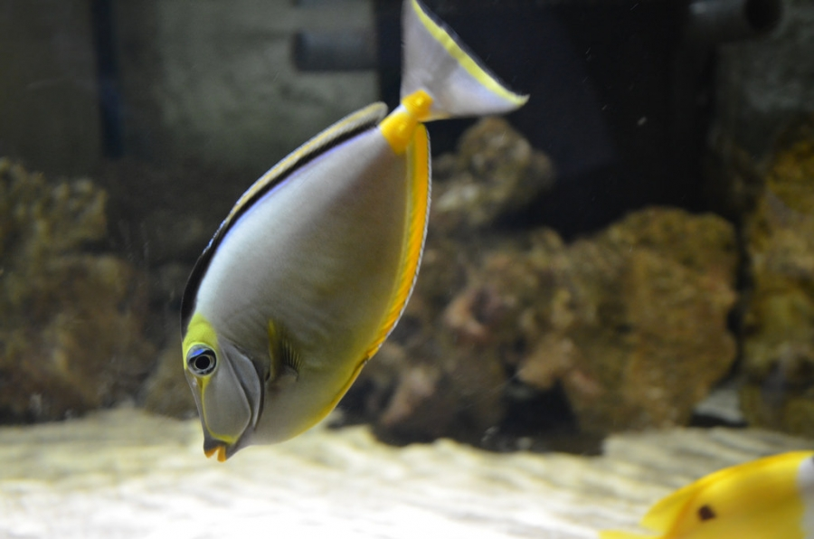 Fish Friendships Facilitate Foraging Opportunities
