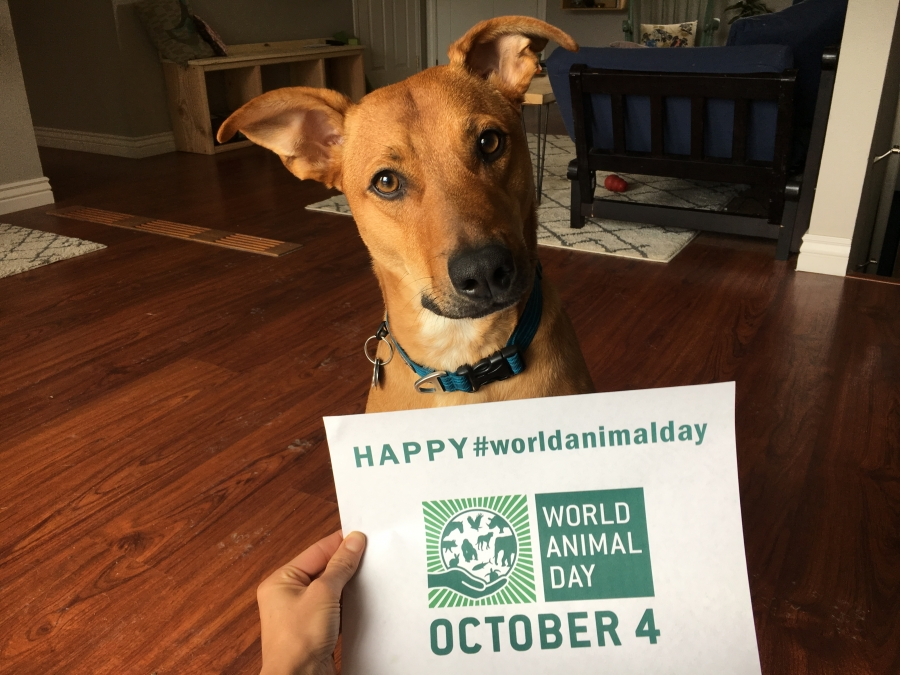 World Animal Net Volunteers, Staff, Board and Animal Companions Celebrate World Animal Day!