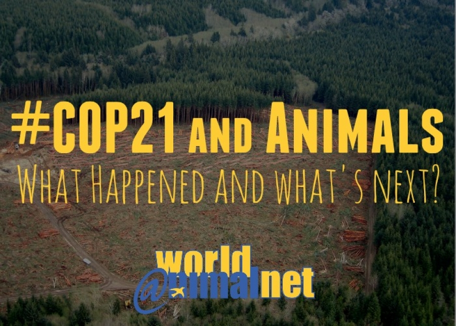 COP 21 and Animals: What Happened and What's Next?