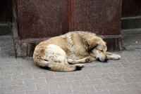Is your organization working to end the suffering caused by rabies?