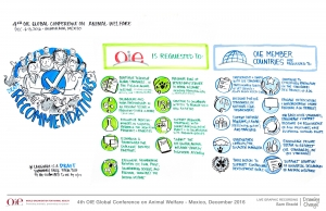 The OIE's 4th Global Animal Welfare Conference: Policy Outcomes in a Nutshell