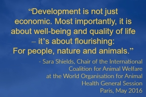 Watch this Space: Notes on Animal Welfare and the World Organisation for Animal Health (OIE) 2016 General Session