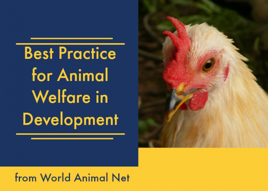 New! Best Practice in Animal Welfare