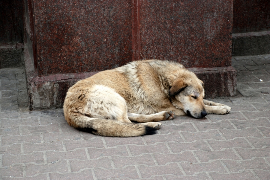 Stray Dog Control: Let's Ramp up Animal Protection Advocacy!