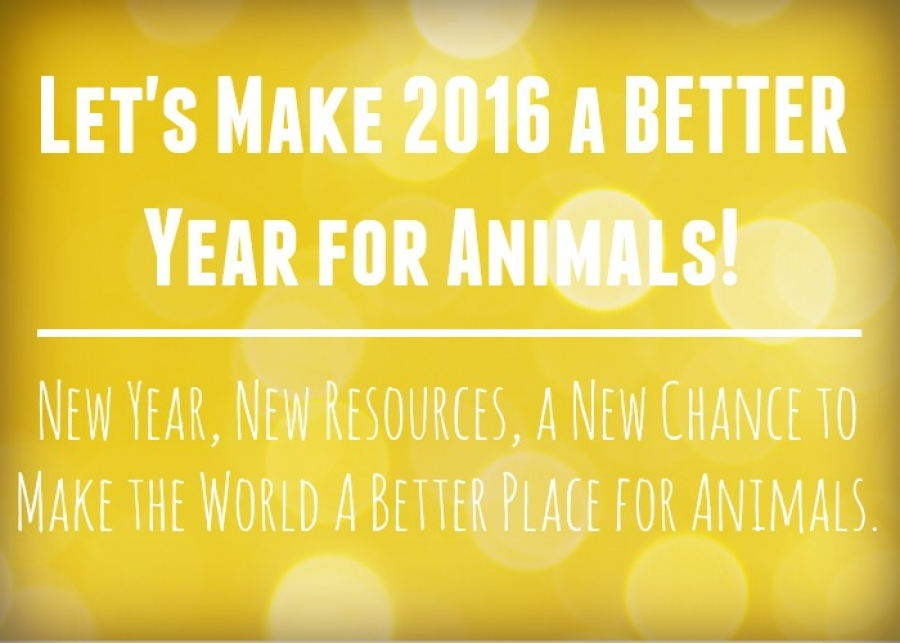 WAN's 2015 Accomplishments: Ensuring a Bright Future for Animals Everywhere