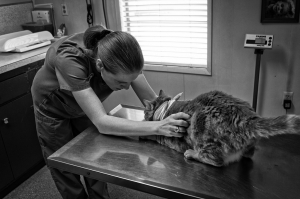 Three Times Veterinary Organizations Stood Up for Animals this Year