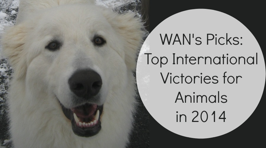 Top International Victories for Animals in 2014