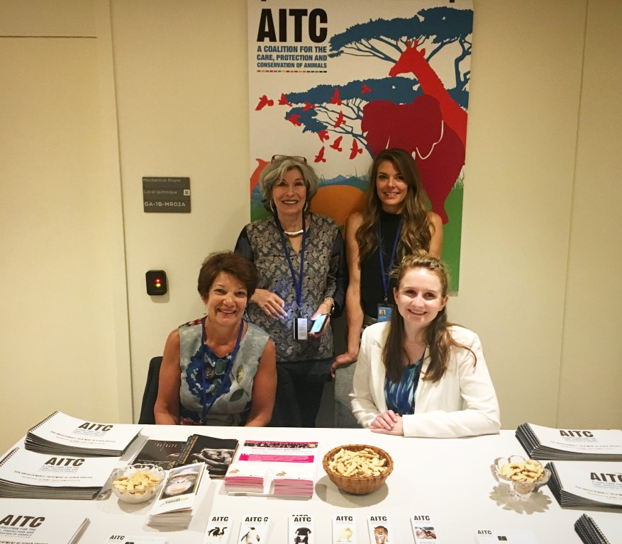AITC Exhibition at UN Headquarters