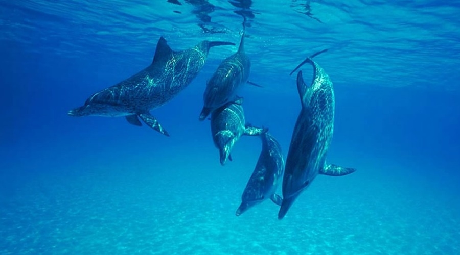 The Science behind the UN's Recognition of Culture in Cetaceans